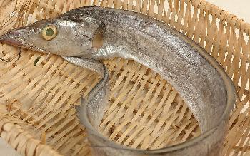 带鱼的营养价值及功效和食用宜忌